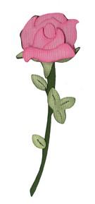Rose / rose 0994